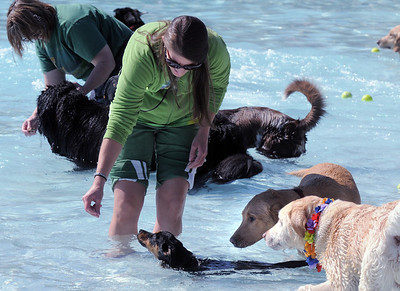 Lindsey Terranova gives her dog Belford a treat while in the water during Dog Daze at the Bay on Saturday. September 10, 2011 staff photo/ David R. Jennings