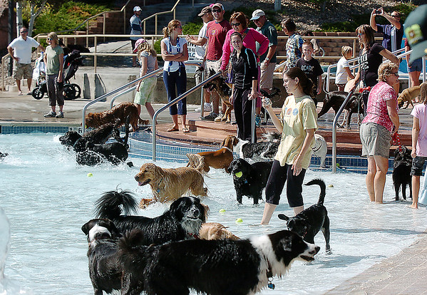 People line the edge of the pool watching their dogs swim and run during Dog Daze at the Bay on Saturday.<br /> September 10, 2011<br /> staff photo/ David R. Jennings