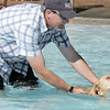 Mark Stubits helps Sage learn to swim during Dog Daze at the Bay on Saturday.  Sage is a Labrador rescue dog.<br /> September 10, 2011<br /> staff photo/ David R. Jennings
