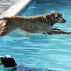 Mas dives into the water chasing after a ball during Dog Daze at the Bay on Saturday.<br /> September 10, 2011<br /> staff photo/ David R. Jennings