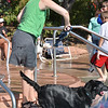 Amy Swanson tosses a fish toy for her dog Tulo to retrieve from the water during the first session of Dog Daze at the Bay on Saturday at The Bay Aquatic Park.<br /> September 8, 2012<br /> staff photo/ David R. Jennings