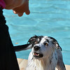 Annie waits for her owner Nicole Hunter to toss a ball into the water during the first session of Dog Daze at the Bay on Saturday at The Bay Aquatic Park.<br /> September 8, 2012<br /> staff photo/ David R. Jennings
