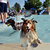 Robbie A sheltie owned by Catherine Elliott works on getting out of the water during the first session of Dog Daze at the Bay on Saturday at The Bay Aquatic Park.<br /> September 8, 2012<br /> staff photo/ David R. Jennings