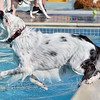 Annie owned by Nicole Hunter jumps into the water for a ball  during the first session of Dog Daze at the Bay on Saturday at The Bay Aquatic Park.<br /> September 8, 2012<br /> staff photo/ David R. Jennings