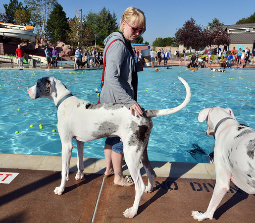 Kara Mastin, with Big Dogs Huge Paws, stands at the water's edge with her Great Danes, Calvin, left, and Jackson who are both deaf and respond to sign language during the first session of Dog Daze at the Bay on Saturday at The Bay Aquatic Park.<br /> September 8, 2012<br /> staff photo/ David R. Jennings