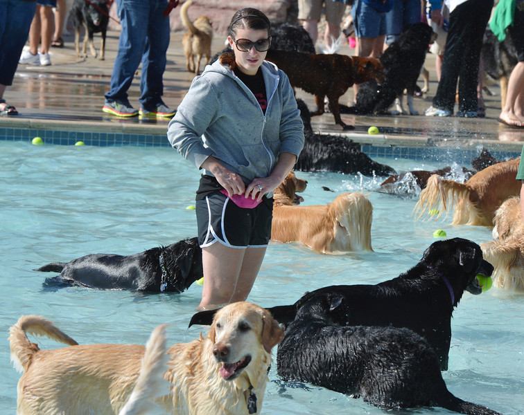 Lindsey Terranova is surrounded by dogs in the water while trying to get her dog Belford to swim during the first session of Dog Daze at the Bay on Saturday at The Bay Aquatic Park.<br /> September 8, 2012<br /> staff photo/ David R. Jennings
