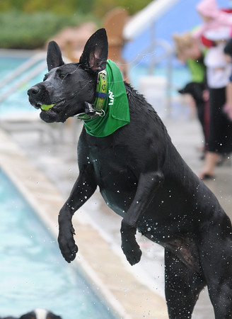 Shelby, owned by Cheryl Bauer, catches a tennis ball in the air during Dog Daze at the Bay on Saturday.<br /> <br /> <br /> Sept. 12, 2009<br /> Staff photo/David R. Jennings