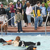Dog owners gather at the edge of the pool to watch their dogs play in the water during Dog Daze at the Bay on Saturday.<br /> <br /> <br /> Sept. 12, 2009<br /> Staff photo/David R. Jennings