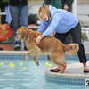Michelle Tschudy tosses her dog, Boo, a therapy dog, into the water during Dog Daze at the Bay on Saturday.<br /> <br /> <br /> Sept. 12, 2009<br /> Staff photo/David R. Jennings