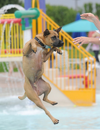 Bryan McCready tosses his boxer mix, Cooper into the pool during Dog Daze at the Bay on Saturday.<br /> <br /> <br /> Sept. 12, 2009<br /> Staff photo/David R. Jennings
