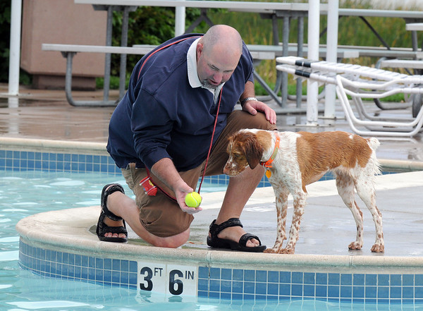 Steve Peterson shows his dog Coulis, a Brittany Spaniel, the tennis ball before giving it a toss into the pool during Dog Daze at the Bay on Saturday.<br /> <br /> <br /> Sept. 12, 2009<br /> Staff photo/David R. Jennings