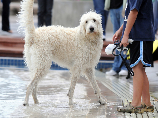Luna, a Labradoodle, stands near his owner Ben Peterson, 9, h while playing in the water during Dog Daze at the Bay on Saturday.<br /> <br /> <br /> Sept. 12, 2009<br /> Staff photo/David R. Jennings