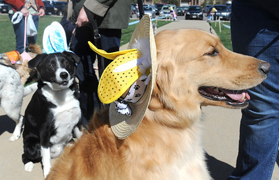 Spike, right, owned by Jessica West, and Rocky, left, owned by Ellen Smith, wear Easter bonnets for the parade during the Paws in the Park egg hunt and Easter bonnet parade at the Broomfield County Commons Dog Park on Saturday. April 7, 2012  staff photo/ David R. Jennings