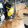 Spike, right, owned by Jessica West, and Rocky, left, owned by Ellen Smith, wear Easter bonnets for the parade during the Paws in the Park egg hunt and Easter bonnet parade at the Broomfield County Commons Dog Park on Saturday.<br /> April 7, 2012 <br /> staff photo/ David R. Jennings