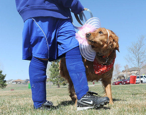 Piper and owner Wesley Gowdy walk in the bonnet parade during the Paws in the Park egg hunt and Easter bonnet parade at the Broomfield County Commons Dog Park on Saturday.  Jack Stussi, 11, and his mother Ceecee dressed george in the winning costume.<br /> <br /> April 7, 2012 <br /> staff photo/ David R. Jennings