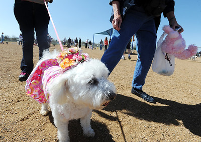 Miss Bebe, owned by Katie Stevens, won third place in the bonnet parade during the Paws in the Park egg hunt and Easter bonnet parade at the Broomfield County Commons Dog Park on Saturday. April 7, 2012  staff photo/ David R. Jennings