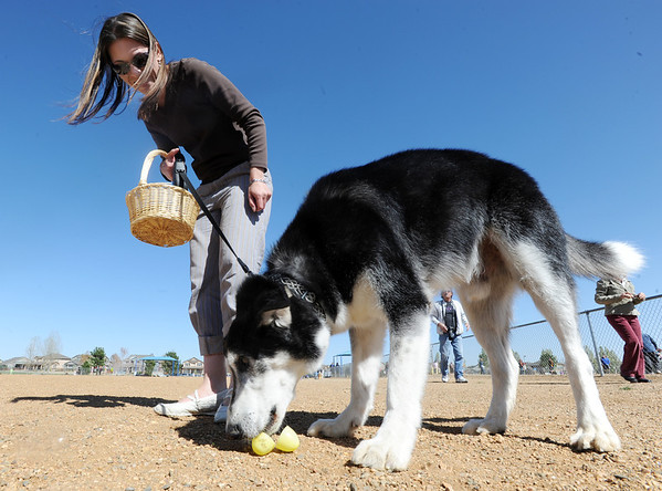 Shirley Lammers guides her dog Stamp to plastic eggs filled with dog treats during the Paws in the Park egg hunt and Easter bonnet parade at the Broomfield County Commons Dog Park on Saturday.<br /> April 7, 2012 <br /> staff photo/ David R. Jennings