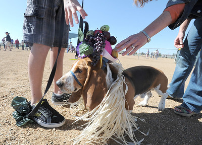 George is dressed for the Easter bonnet parade by Jack Stussi, 11, left, and his mother Ceecee during the Paws in the Park egg hunt and Easter bonnet parade at the Broomfield County Commons Dog Park on Saturday.  Jack Stussi, 11, and his mother Ceecee dressed george in the winning costume.  April 7, 2012  staff photo/ David R. Jennings
