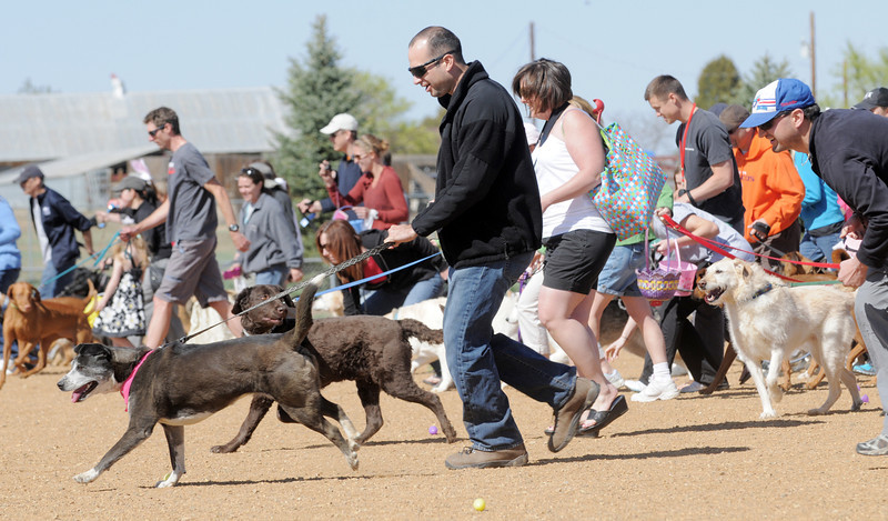 Dogs and their owers scramble to find plastic eggs filled with dog treats during the Paws in the Park egg hunt and Easter bonnet parade at the Broomfield County Commons Dog Park on Saturday.<br /> April 7, 2012 <br /> staff photo/ David R. Jennings