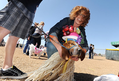 Ceecee Stussi dresses the family dog, George, in the winning costume for 1st place in the bonnet parade during the Paws in the Park egg hunt and Easter bonnet parade at the Broomfield County Commons Dog Park on Saturday.   April 7, 2012  staff photo/ David R. Jennings
