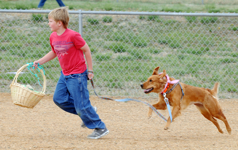 Wesley Gowdy, 7, runs with Piper as they hunt for plastic eggs filled with doggie treats during the Easter Egg Hunt for Dogs at the Broomfield County Commons Dog Park on Saturday.<br /> <br /> April 23, 2011<br /> staff photo/David R. Jennings