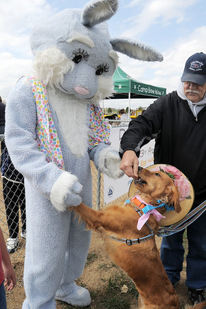 Piper gets a treat form owner Bill Gowdy while preparing to have their picture taken with Flopsy the Bunny during the Easter Egg Hunt for Dogs at the Broomfield County Commons Dog Park on Saturday.<br /> <br /> April 23, 2011<br /> staff photo/David R. Jennings