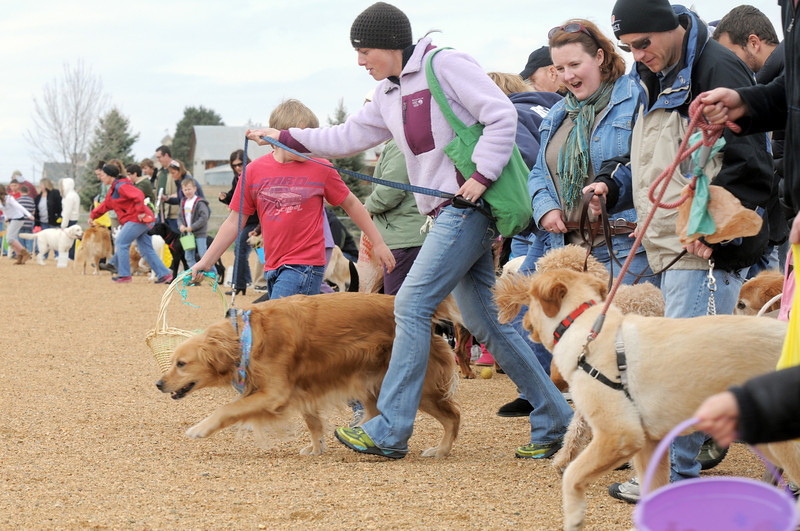 Dogs and owners run towards plastic eggs full of dog treats during the Easter Egg Hunt for Dogs at the Broomfield County Commons Dog Park on Saturday.<br /> <br /> April 23, 2011<br /> staff photo/David R. Jennings