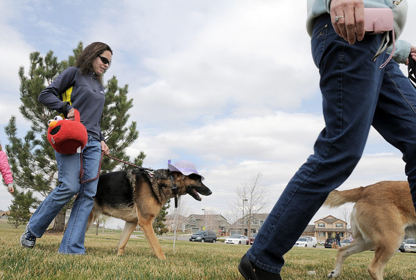 Rylee, wearing an Easter bonnet, walks with owner Kathy Frank during the parade at the Easter Egg Hunt for Dogs at the Broomfield County Commons Dog Park on Saturday.<br /> <br /> April 23, 2011<br /> staff photo/David R. Jennings