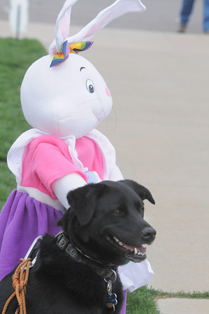 Zoe poses next to an Easter bunny  while owner Jenny Loeb takes pictures during the Easter Egg Hunt for Dogs at the Broomfield County Commons Dog Park on Saturday.<br /> <br /> April 23, 2011<br /> staff photo/David R. Jennings