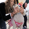Katie Stevens attaches rabbit ears to her dog, BeBe, for the bonnet parade at the Easter Egg Hunt for Dogs at the Broomfield County Commons Dog Park on Saturday.<br /> <br /> April 23, 2011<br /> staff photo/David R. Jennings
