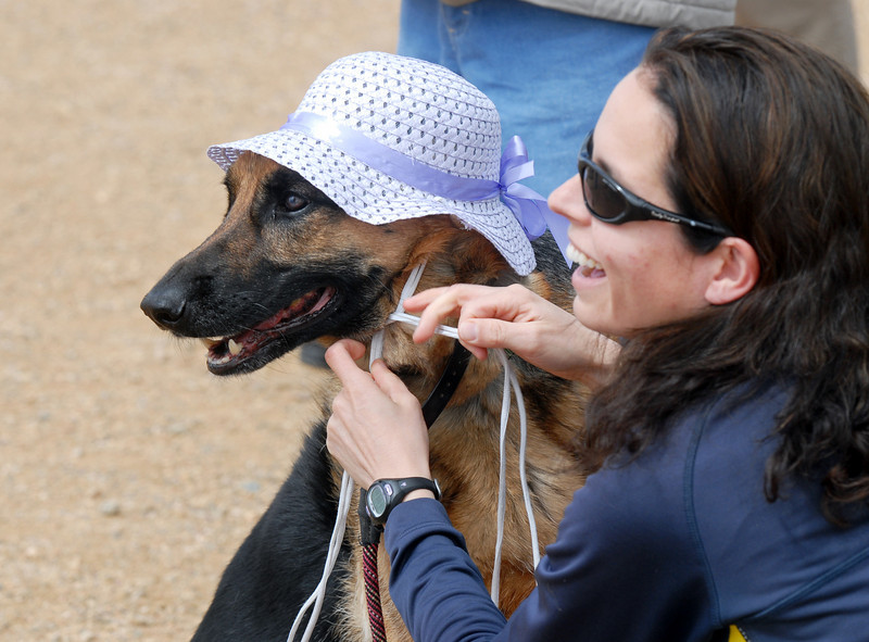 Kathy Frank secures an Easter bonnet on to her German Shepard, Rylee, for the bonnet parade during the Easter Egg Hunt for Dogs at the Broomfield County Commons Dog Park on Saturday.<br /> <br /> April 23, 2011<br /> staff photo/David R. Jennings