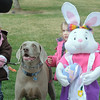 Sully poses for pictures with Katelyn Weaver, 4, right, and her sister Lauren, 6, during the Easter Egg Hunt for Dogs at the Broomfield County Commons Dog Park on Saturday.<br /> <br /> April 23, 2011<br /> staff photo/David R. Jennings
