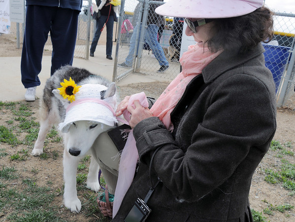 Cathy Balogh, right, ties a bonnet on to her Husky, Isis, for the bonnet parade at the Easter Egg Hunt for Dogs at the Broomfield County Commons Dog Park on Saturday.<br /> <br /> April 23, 2011<br /> staff photo/David R. Jennings