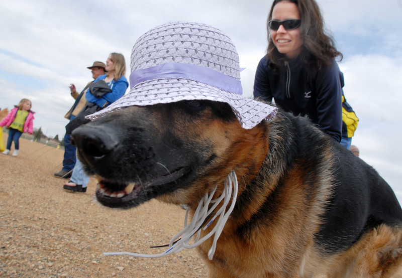 Rylee, while wearing an Easter bonnet, looks for Easter eggs with owner Kathy Frank during the Easter Egg Hunt for Dogs at the Broomfield County Commons Dog Park on Saturday.<br /> <br /> April 23, 2011<br /> staff photo/David R. Jennings
