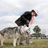 Cathy Balogh and her dog, Isis, lead the bonnet parade at the Easter Egg Hunt for Dogs at the Broomfield County Commons Dog Park on Saturday. Isis won for best bonnet. <br /> <br /> <br /> April 23, 2011<br /> staff photo/David R. Jennings