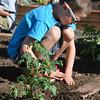 bent05169emerald_garden24