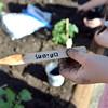 bent05169emerald_garden12