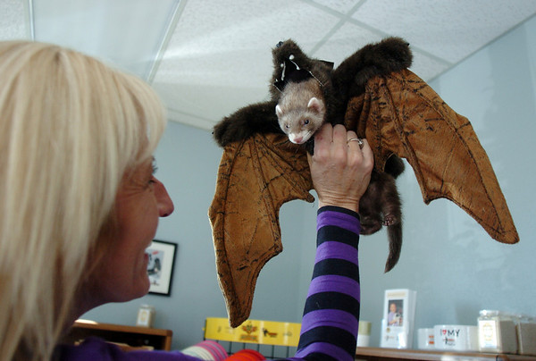 Gwen Lenhardt dressed her ferret Eddie in a bat costume for the costume contest at the Ferret Halloween Party at Performance Foods on Saturday.<br /> <br /> October 16, 2010<br /> staff photo/David R. Jennings