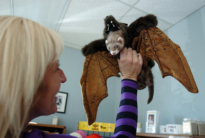 Gwen Lenhardt dressed her ferret Eddie in a bat costume for the costume contest at the Ferret Halloween Party at Performance Foods on Saturday.  October 16, 2010 staff photo/David R. Jennings