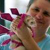 Gwen Nicodemus dressed her ferret Josie as a pink dinosaur for the costume contest at the Ferret Halloween Party at  Performance Foods on Saturday.<br /> <br /> October 16, 2010<br /> staff photo/David R. Jennings