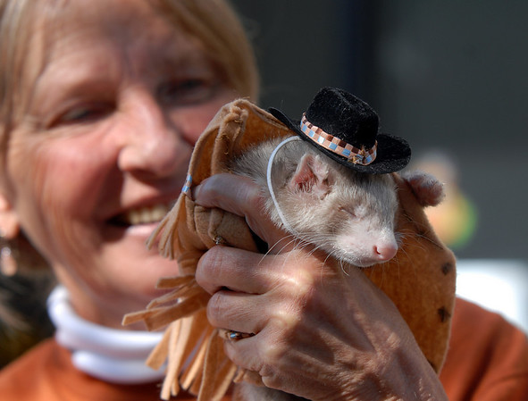 Santos, dressed as a cowboy, fell asleep while being held by Marsha Pietroiacovu, holding the ferret for her daughter April, during the costume contest at the Ferret Halloween Party at Performance Foods in Broomfield on Saturday.<br /> <br /> October 16, 2010<br /> staff photo/David R. Jennings