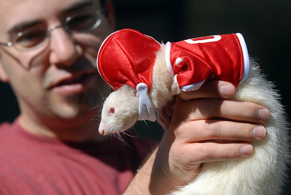 Todd Bryan holds his ferret Angelica dressed as a football player for the costume contest at the Ferret Halloween Party at  Performance Foods in Broomfield on Saturday.<br /> <br /> October 16, 2010<br /> staff photo/David R. Jennings
