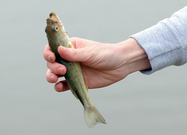 Many children caught fish during Saturday's Fishing Derby at Tom Frost Reservoir.<br /> May 12, 2012 <br /> staff photo/ David R. Jennings