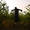 Frightmare Compound actor Jeff Nadeau at his post as the scarecrow in a corn field for the haunted house at 108th and Old Wadsworth opens on Friday night.<br /> The make-up artists have to get the 40 actors ready for the show in a hour.<br /> October 5, 2012<br /> staff photo/ David R. Jennings