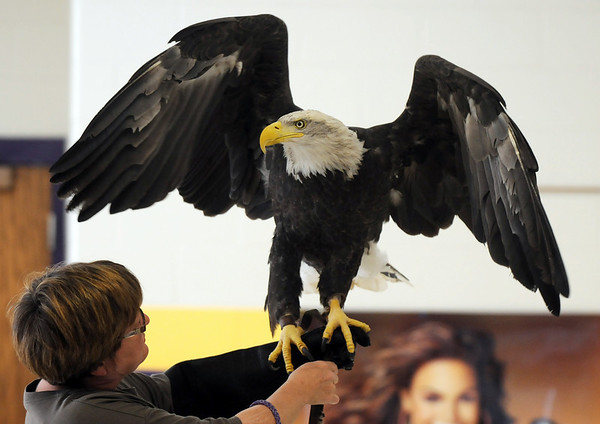 Volunteer Lynn Logman holds a 3 year old female Bald Eagle during a presentation by HawkQuest to Westlake Middle School 6th graders in the Wolf Pack Corps on Tuesday.<br /> <br /> November 24, 2009<br /> Staff photo/David R. Jennings
