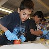 Emerald Elementary School 2nd grader Marco Coronado Barrios slices an apple while preparing healthy snacks for the Healthy Learning Paths program by Dr. Chris Marchioni on Tuesday.<br /> <br /> October 20, 2009<br /> Staff photo/David R. Jennings
