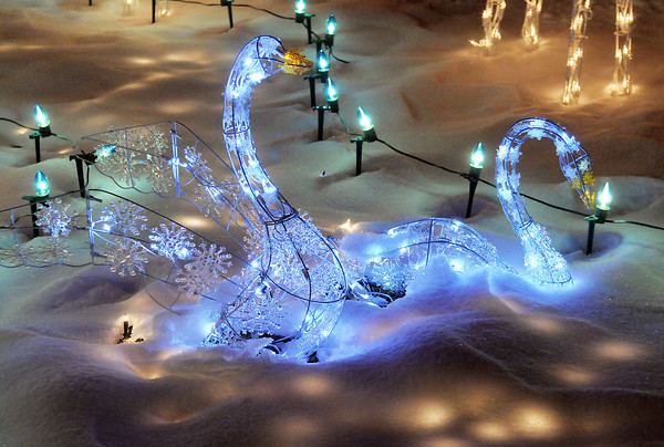 "Blue swans compliment the holiday lighting display at 3038 W. 134th Place.<br /> More photos please see  <a href=""http://www.broomfieldenterprise.com"">http://www.broomfieldenterprise.com</a><br /> December 9, 2011<br /> Staff photo/ David R. Jennings"
