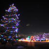 The old pine tree in Midway Park with the decorated trees along Midway Drive.<br /> December, 2010<br /> staff photo/David R. Jennings