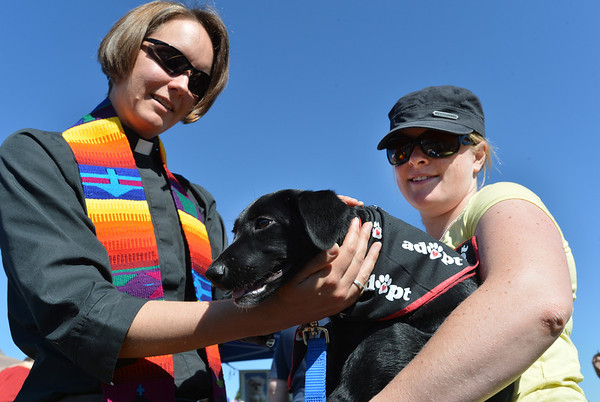Rev. Kim Seidman blesses Blessing held by Molly McGannon with Mile High Lab Misson, during the Blessing of the Animals at Holy Comforter Episcopal Church on Saturday. Blessing a Black lab was named after a town in Texas.<br /> September 29, 2012<br /> staff photo/ David R. Jennings