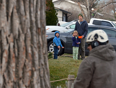 The Gatto family watches workers with Arbortec tree service cut sections off of a 92 year old cottonwood tree along King Circle on Tuesday, rescuing two honeybee hives containing 80,000 honey bees. November 27, 2012 staff photo/ David R. Jennings